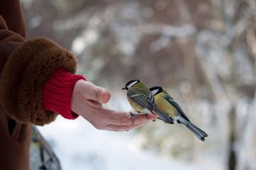 bird eats with palms, winter park