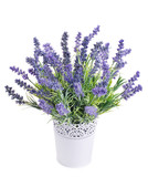 pot with lavender isolated on a white