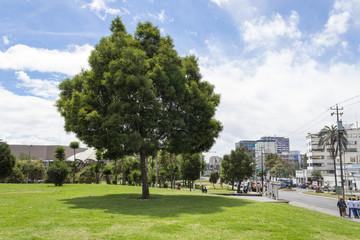 El Arbolito park Quito Ecuador South America