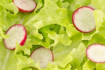 Lettuce and radishes salad