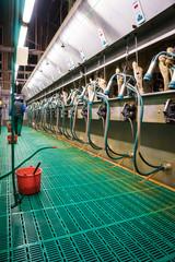 Milcherzeugung, moderner Fischgrätenmelkstand