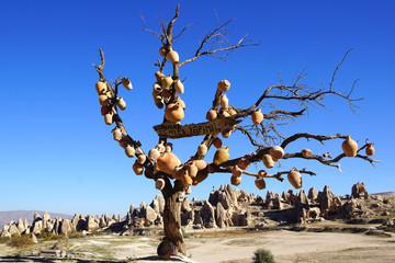 Jugs on a tree in Cappadocia, Turkey