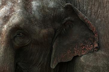 Éléphant en gros plan