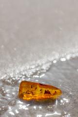amber stone shine baltic sea sand insect inclusion