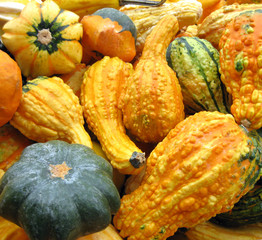 Gourds to decorate the table for Thanksgiving