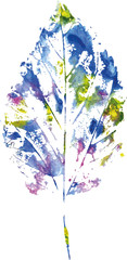 beautiful leaf of a tree  painted watercolors