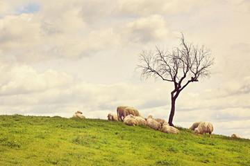 On pasture