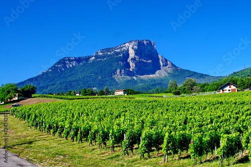 Papiers peints Alpes vignoble de savoie
