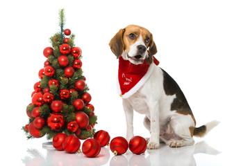 Singender Weihnachtshund