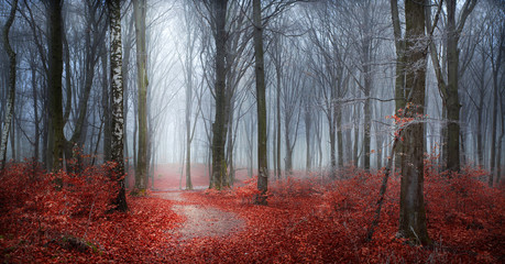 Fairytale romantic forest with red leaves, fog and frost