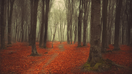 Romantic trail through the forest with mist and red leaves