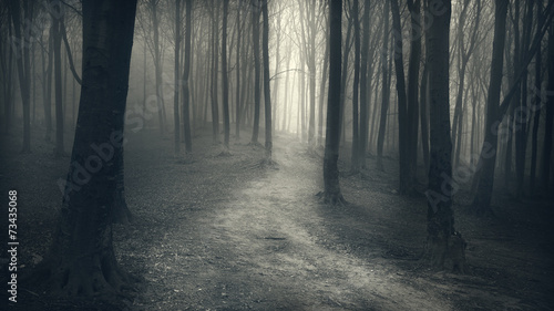 Dark Forest with trail in the fog