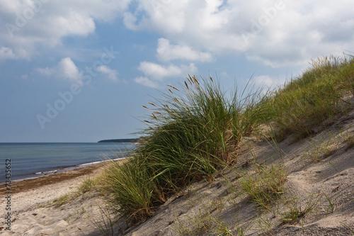 Strandhafer auf dem Darß - 73435652