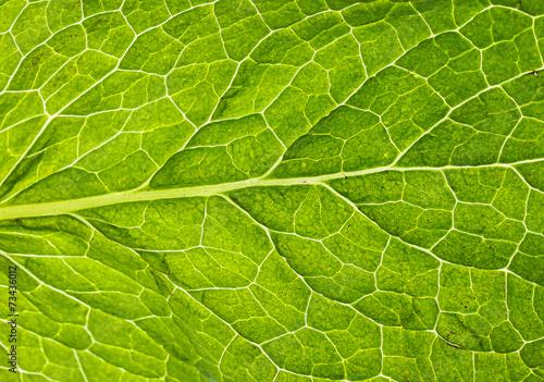 Papiers peints Herbe, epice Mint leaf