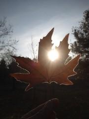 sonbahar ve meditasyon