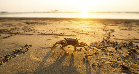 Crab on the golden sand of the sea coast.