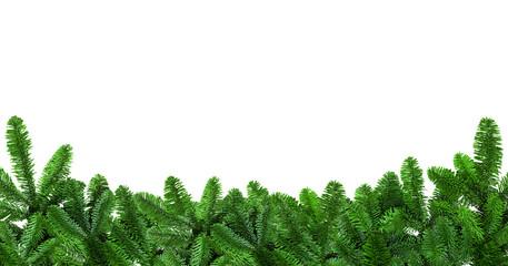Tannenzweige vor weißem Hintergrund