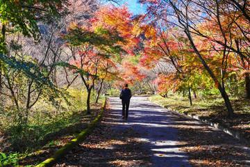 船尾滝への散歩道1