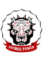 Pitbull head