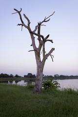 The tree dry