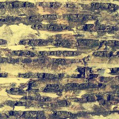 Texture of birch bark, natural background