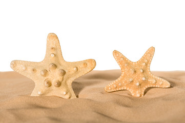 Starfishes in sand