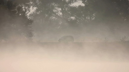 The one car in the forest near the river. Early morning