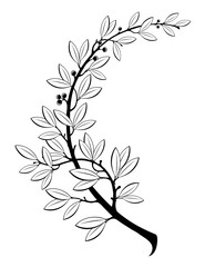 Vector illustration contains the image of laurel branch