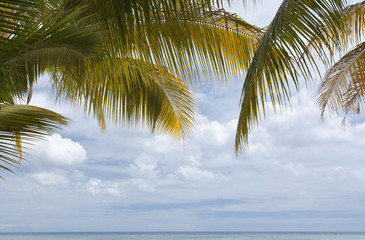 palmes de cocotiers sur fond de ciel