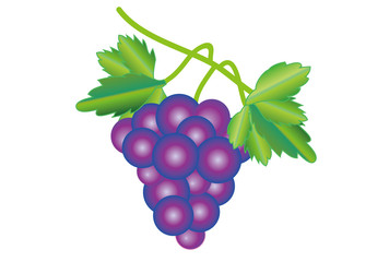 紫のぶどうの房と緑の葡萄の葉