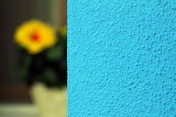 house of Burano with blue wall and a flower