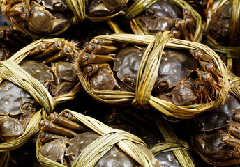 Chinese hairy crabs