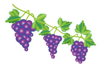葡萄の房とぶどうの葉のイラスト