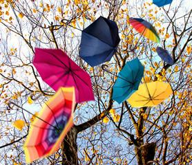 Herbst: Windiger Tag mit bunten Regenschirmen :)