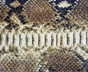 background of snake skin