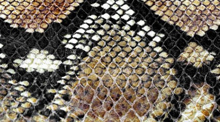 background of snake skin for leather clothes