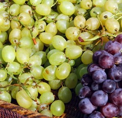 grapes in wicker basket in the autumn after the harvest