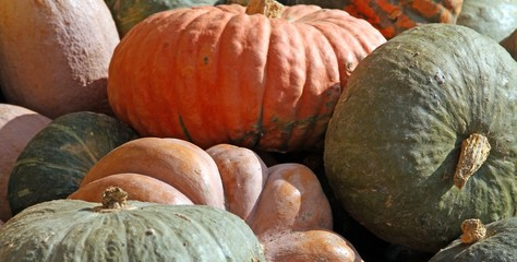 PUMPKINS collections to decorate halloween
