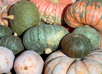 pumpkins for sale directly by the farmer