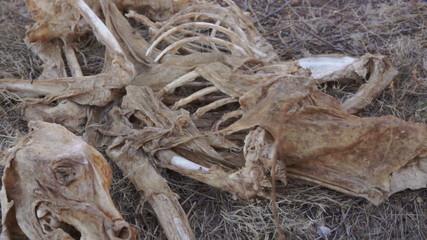 Carcass Skeleton Dead Animal