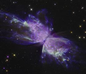 Butterfly nebula with a butterfly
