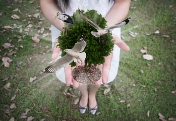 tree with bird in the hands ,concept of ecology
