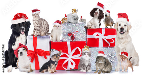 Staande foto Papegaai Haustiergruppe an Weihnachten isoliert