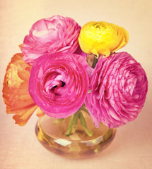 Colorful ranunculus flower in a yellow vase on vintage backgroun