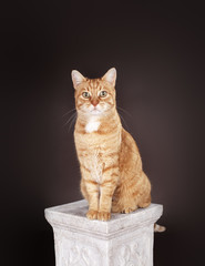 Cat sitting on a column