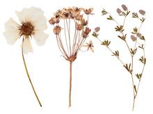 "Постер, картина, фотообои ""Set of wild flowers pressed"""