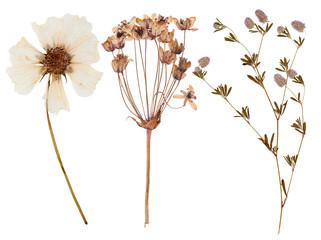 Set of wild flowers pressed