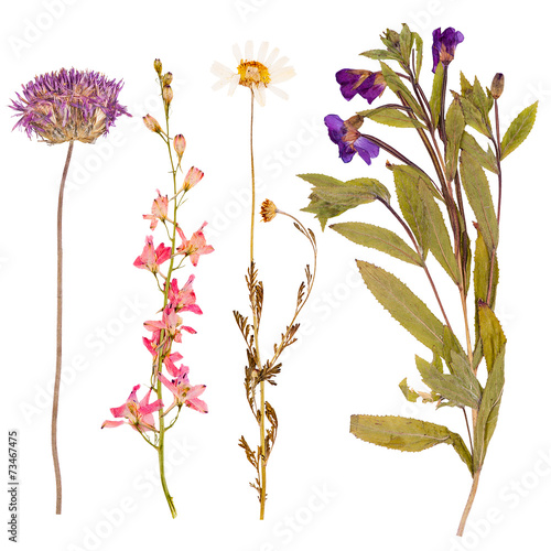 Fotobehang Lente Set of wild flowers pressed