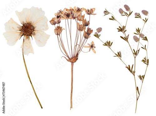 Fotobehang Bloemen Set of wild flowers pressed