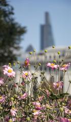 Flowers, London